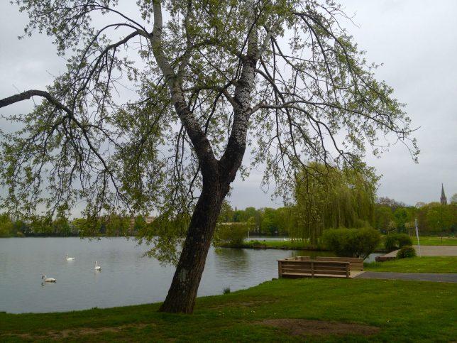 Le Plan d'eau de Metz