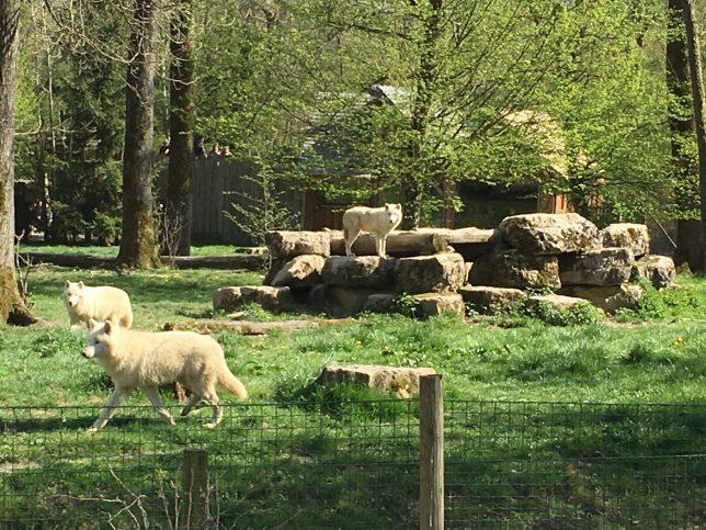 moselle-parc-animalier-sainte-croix-adoptemetz
