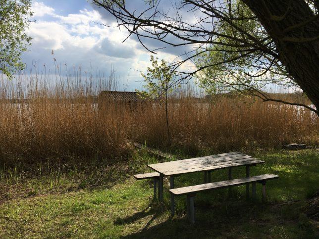 morelle-étang-welschhof-puttelange-aux-lacs-adoptemetz