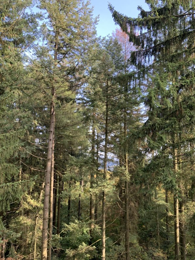Baumwipfelpfad-Saarschleife-boucle-sarre-adoptemetz