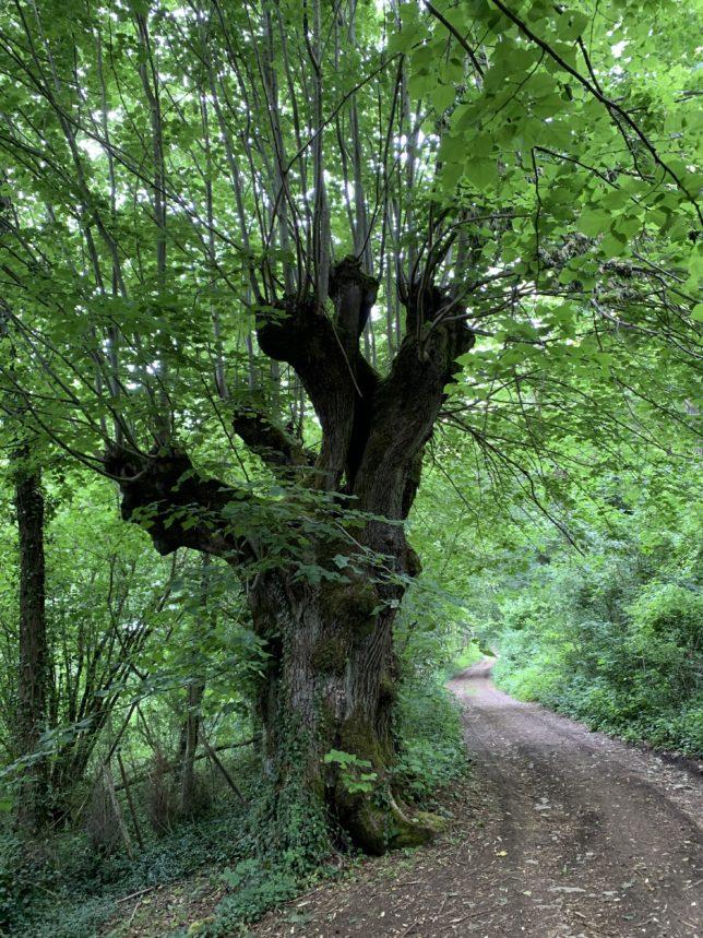 croix-saint-clement-ancy-sur-moselle-forêts-de-moselle-adoptemetz