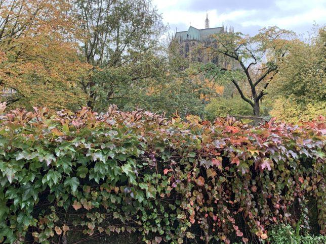 automne-à-metz-cathédrale- adoptemetz