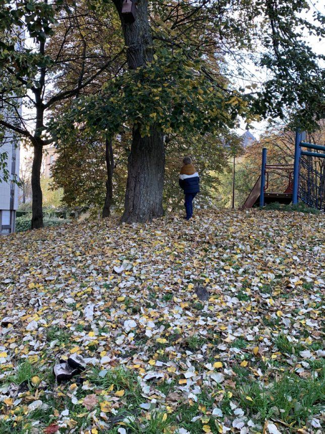 automne-à-metz-pontiffroy-adoptemetz